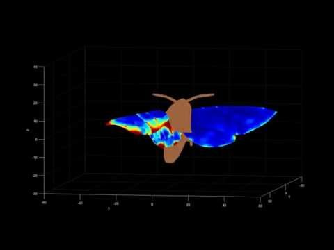 Strain Energy Of Estimation Moth Wings From The Multiple Camera Reconstruction Mp3