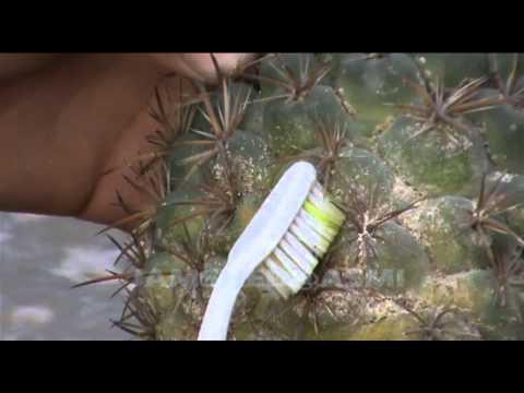 Murang lunas para sa halamang-singaw sa daliri ng paa kuko