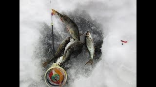 Форум чебоксары рыбалка