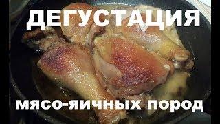 Дегустация мясо-яичных пород. Чьё мясо вкуснее!