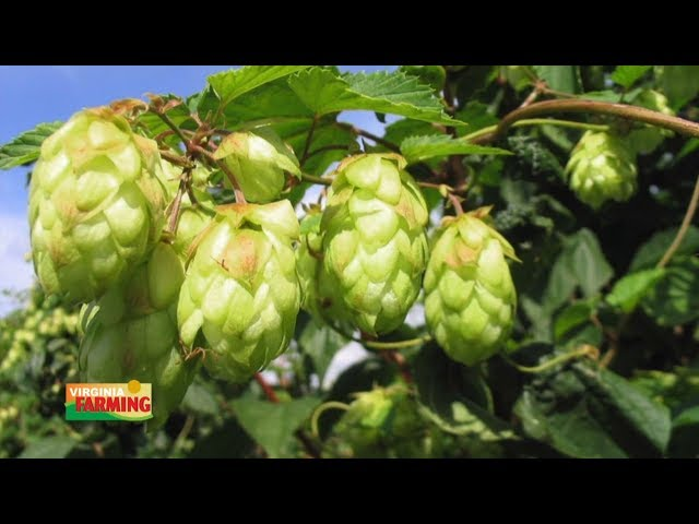 Virginia Farming: Stable Craft Brewing 1423
