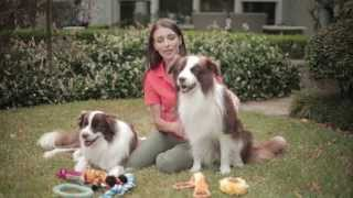 Raising Two Puppies - Q & A's with Dr Katrina