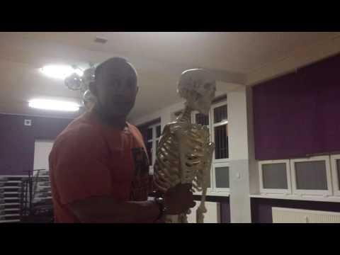 Przekrój paski i mięśni gładkich