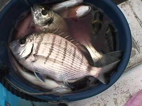 Pesca di una fotografia Saratov