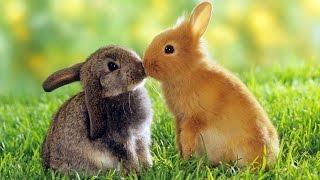 Кролики - смешные и милые зайчики. Видео Подборка - [NEW HD]