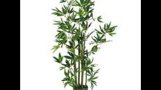 Silk Bamboo Trees,  Bamboo Trees, Silk Bamboo Plants,  Artificial Silk Tree, Silk Trees & Plants