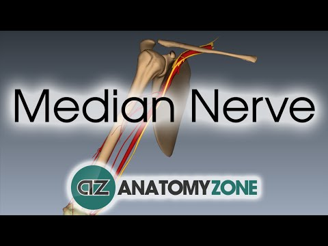 Anatomy zone medtube min 00s ccuart Choice Image