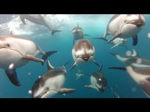Dolphin Ecards Shot 100 on the HD HERO2 camera from  Mark Peters..