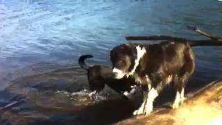 Cara and Daksi playing in freezing water