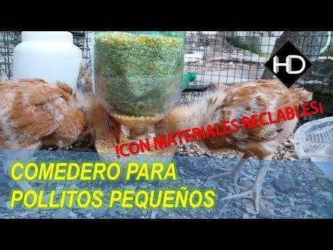 ¿Como hacer un Comedero Automático para pollitos pequeños?- facilisimo