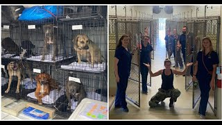 Animal shelter celebrates completely clearing shelter of over 70 animals