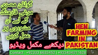 Desi Hen Chicks Farming in Pakistan|Desi murgi Farming