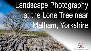 Landscape Photography at the Lone Tree near Malham, Yorkshire
