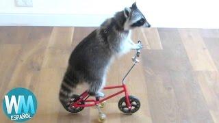 ¡Top 10 Animales Inteligentes!