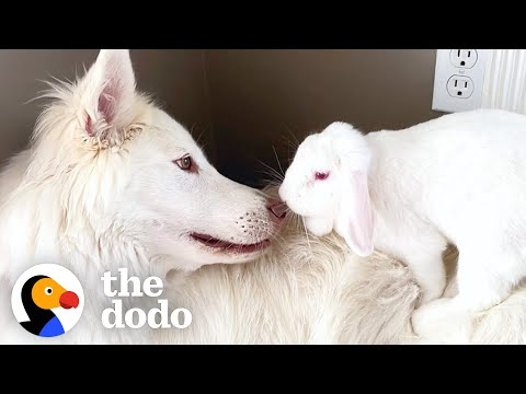 This Dog and Bunny Are Basically a Brother-Sister Duo