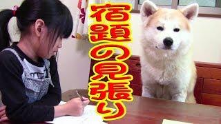 秋田犬 惣右介 宿題当番 焼き鳥美味しいね♪
