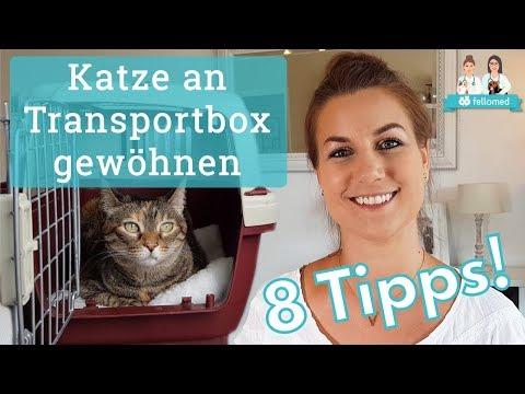 Transportbox: Mit diesen 8 Tipps gewöhnst du deine Katze daran!
