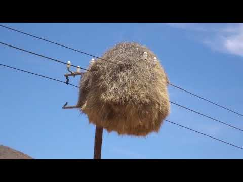 Weaverbird все видео по тэгу на igrovoetv online