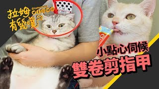 Angry Cats Cut Nail┃LAMUNCATS ♧