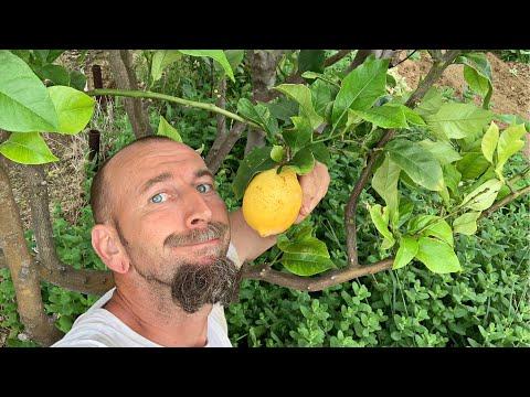 apró mandarin fogyás)