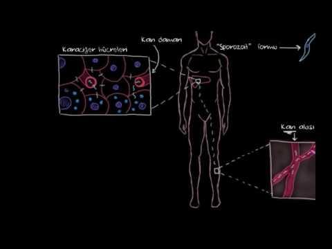 Sıtma Nedir? (Bulaşıcı Hastalıklar)