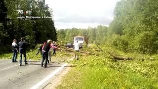 В Ярославлской области упавшее дерево перегородило дорогу