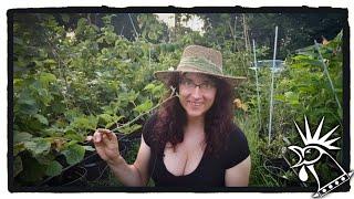 Complete Perennial Edible Garden Tour   Vegan Homesteading