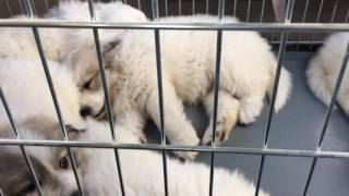 Puppies go to the vet
