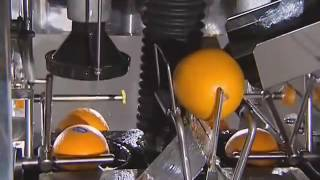 Top 10 Best Commercial Citrus Juicers in 2020 Reviews - Spare Mine