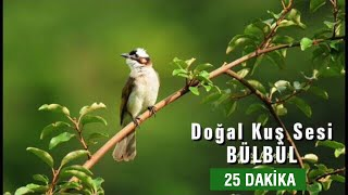 Doğal Kuş Sesi | RAHATLATICI TERAPİ (25dk.)