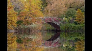 New York Landscape Photography: Central Park In Fall