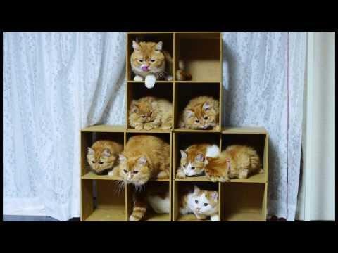 群貓躲進格子櫃,然後用激光射向牠們,結果!!!