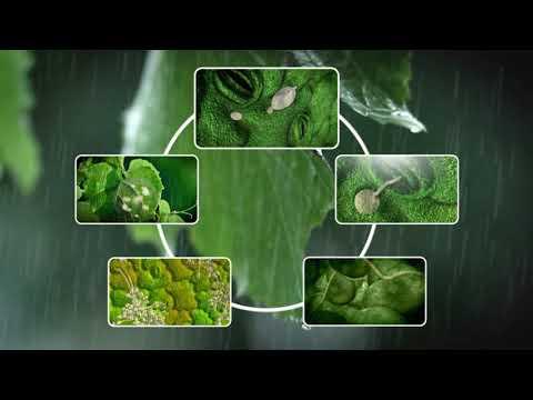 Injecții pentru verucile genitale