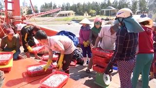 Phú Yên: Mưa bất thường làm hơn 2.000ha lúa vụ Đông Xuân bị ngập úng