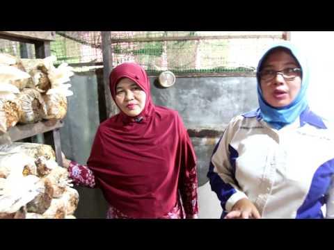 Video Bahagianya Yuyun Berhaji dari Budidaya Jamur