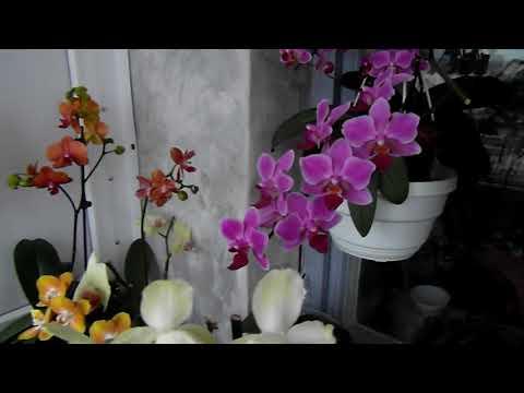 Кашпо - убийца орхидей?!!!
