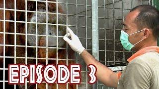 "We Love Orangutans - ""Enrichment coordinator, Jhon Leo"""