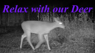 Relax With Our Deer #558