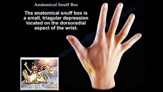 Anatomical Snuff Box - Everything You Need To Know - Dr. Nabil Ebraheim