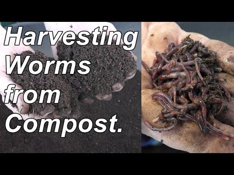 Worms tulad ng isang alupihan