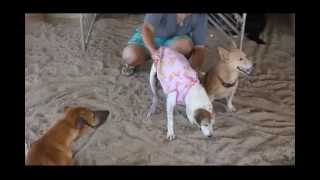 preview picture of video 'Mabprachan Animal Shelter Tha Mai Thailand'