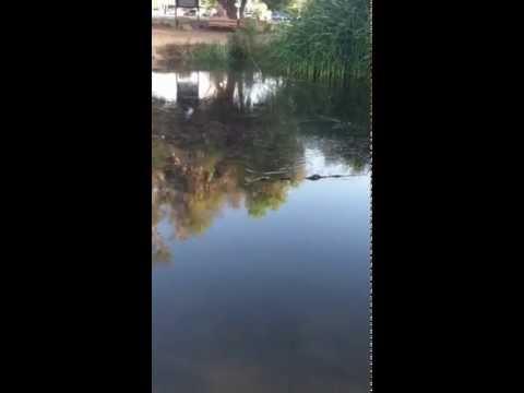 Bass Fishing Kit Carson park pond
