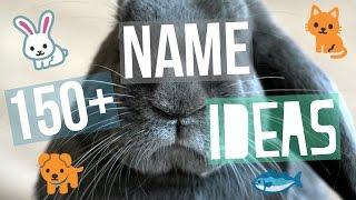 150+ Pet Name Ideas
