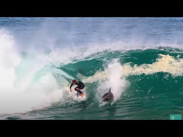 Un delfín salta una ola a Soli Bailey