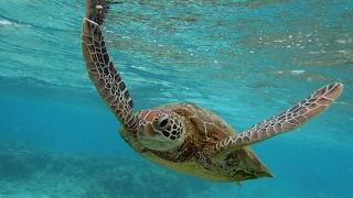 Harmful chemicals found in Australia sea turtles