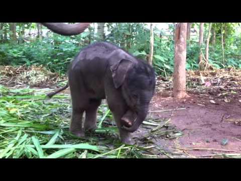 Plutselig oppdager elefantungen at den har snabel