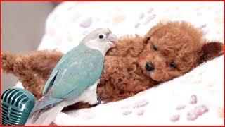 приколы собаки #9 милые щенок и пес