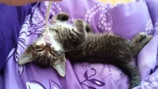 Котик крепко спит