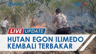 Lahan 11 Hektar di Hutan Lindung Egon Ilimedo NTT Kembali Terbakar, Polisi Lakukan Penyelidikan