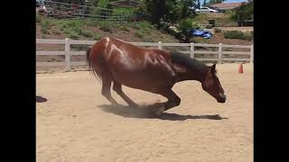 Funny Horses Farting